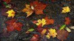 Autumn leaves drifting...
